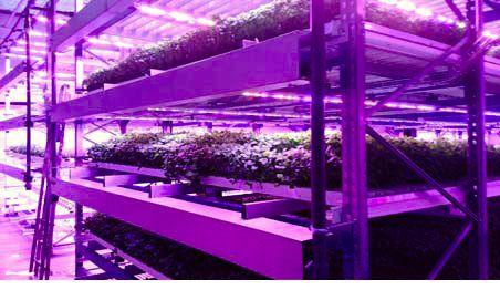 富士通など、フィンランドに完全人工光型植物工場を活用する農作物の生産・販売を行う新会社を設立