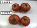 国土防災、独自開発の「純国産フルボ酸」で土壌改善。農作物の品質向上で実証実験成功