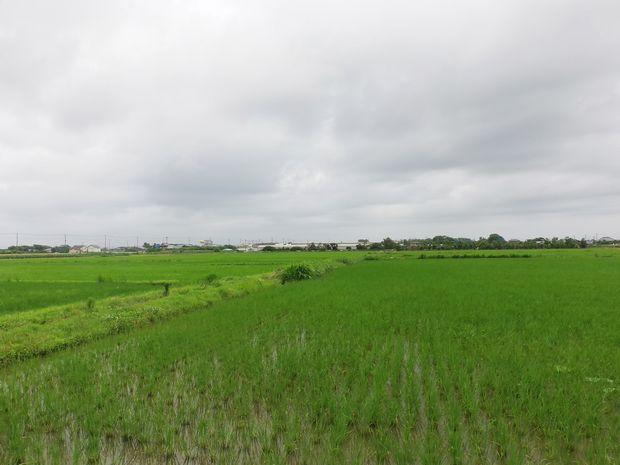 国土防災技術、純国産フルボ酸による土壌改良、塩害被害の水田を半年間で改善