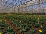 ベトナム・ホーチミン市が農業の近代化プランを発表。2020年までに農家平均所得を32万円以上へ