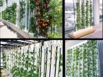 グリーンラボ、移動式・インテリア縦型の太陽光利用型植物工場システムを販売