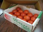 群馬県、根域制限栽培による高糖度トマトの出荷開始