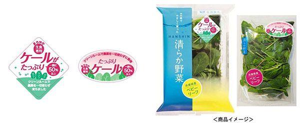 阪神野菜栽培所の植物工場、新たにケールのベビーリーフ商品を販売