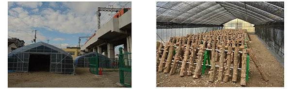 阪神電鉄、鉄道高架下にて植物工場だけでなくハウスによる原木シイタケ栽培も開始