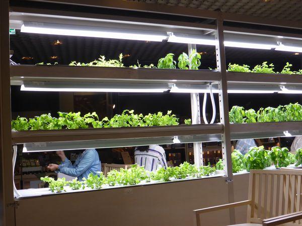 原宿・BROOK'S green caféがリニューアル。店内には植物工場・水耕栽培による野菜の栽培も