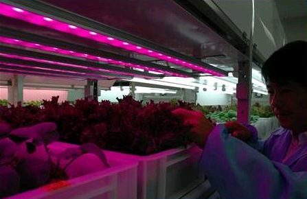 丸紅が地下に植物工場の見学・ショールームをオープン(大阪)