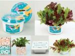 サカタのタネ、種子と土と容器がセットの入門者向け栽培キット3商品を発売