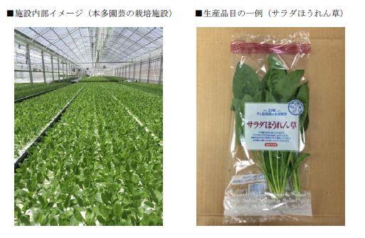 オリックス八ヶ岳農園、太陽光利用型植物工場によるサラダほうれん草など「八ヶ岳ブランド野菜」の生産を開始