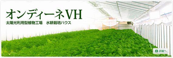 兵神機械工業、低コスト型植物工場・水耕栽培施設による生産・直売所をオープン