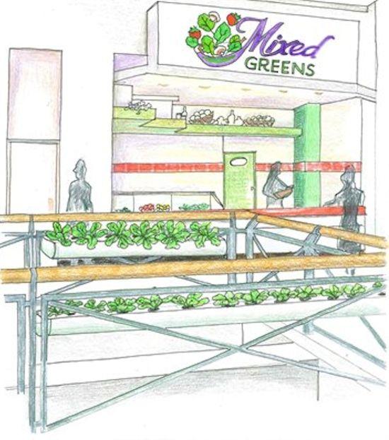 店舗併設型植物工場における海外の反応(サブウェイ)/国内でも拡大の流れ(金沢・メープルハウス)