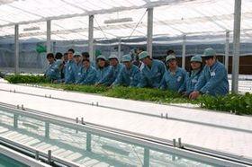 クボタ、農業生産法人の認定を受け、耕作放棄地(遊休農地)を活用した水耕栽培へ