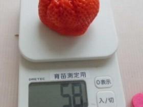 人工光型植物工場で世界最大の高糖度イチゴを生産