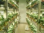 LED型植物工場による生産システムの確立へ いちごカンパニー