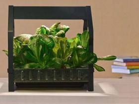 IKEAがオシャレな家庭用・植物工場キットを発表。誰でも栽培できるキッチングッズとして