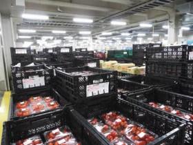 サイエスト、インドのコールドチェーン改革を開始。40%の食品ロス削減へ