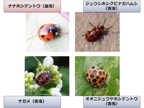 NECソリューションイノベータ「画像認識による虫画像の同定を支援する技術」で共同研究開始