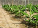 カーテンウォールで世界大手の中国・瀋陽遠大がイスラエルの灌漑企業を買収