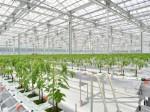 JFEエンジニアリングなど、オランダ式の太陽光利用型植物工場にてトマト・ベビーリーフの生産へ