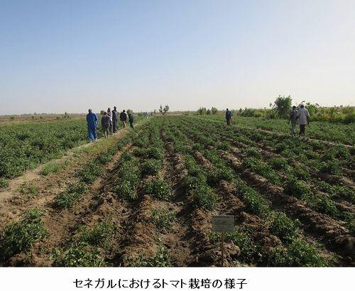 カゴメ、セネガルにおけるトマト栽培・加工事業準備調査を開始