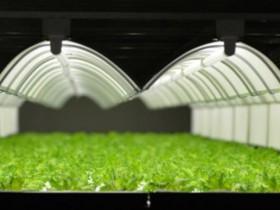 バイテックHDグループ、鹿児島県薩摩川内に完全人工光型植物工場を新設。結球レタス等の生産を予定