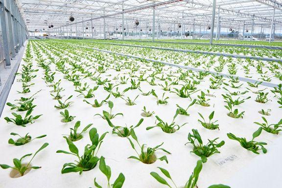 三菱樹脂、オーストラリア現地会社にて太陽光型植物工場が稼働