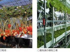 住友化学、シンガポール政府と都市型農業PJ開始。屋上スペースに植物工場も稼働
