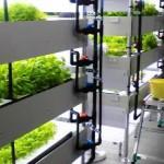 水耕栽培事業の第二期計画として障害者を主体とした低カリウム野菜の生産をスタート(山形包徳)