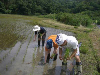 神明HD、キッザニアと共同にて農業体験プログラムを実施