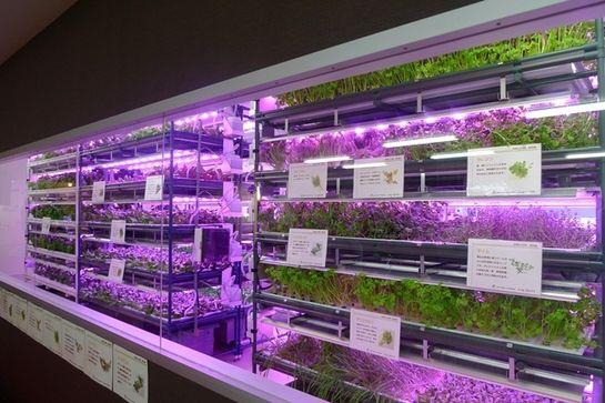 キーストーン・アグリ王による植物工場、高機能野菜やハーブ商品をオイシックスにて販売