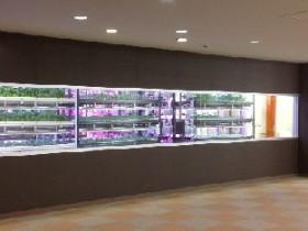 新横浜LED植物工場産「ハイカラ野菜」を都内百貨店で販売開始(エディブルフラワーも生産)