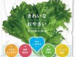 バイテックHDによる1万株規模の植物工場レタス商品が秋田県大館市にて販売開始