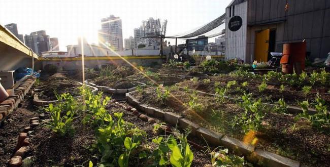 韓国ソウル市の「地産地消型クッキング講座」。屋上ファームと料理教室の融合サービス