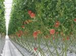 植物工場によるトマト生産拠点の四万十町をメインに「高知トマトサミット」東京・高知で3月開催