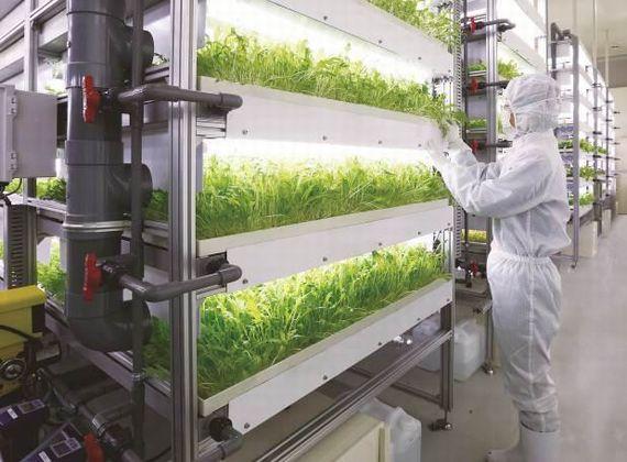 三菱化学、ローソンファーム秋田からベビーリーフ用の植物工場システムを受注