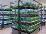 キーストーンテクノロジー、RGB独立制御型・全面LED型の植物工場ユニットを大規模施設に導入