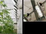 スタンレー電気、植物工場向けのLED照明を開発