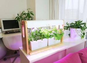 リビングファームによる人と植物の共生。家庭用の水耕キットを通じて新しいライフスタイルを実現