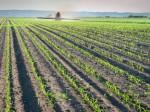 丸紅、ミャンマーで肥料加工と輸入肥料の小分け販売を開始