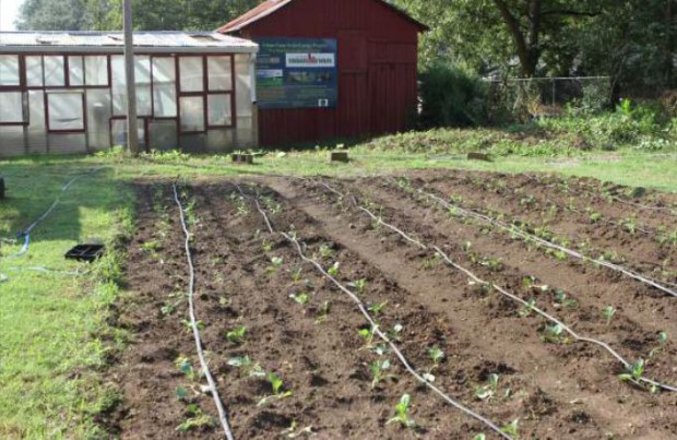 メトロ・アトランタが都市型農業を拡大するために米国農務省から約2,500万円の補助金を獲得
