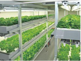 建設機器レンタルのニシケンも人工光型の小型・植物工場を販売/その他、豊光社やクリエイト光など九州地方での参入も相次ぐ