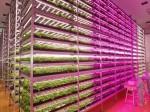 みらい、フルLED光源を採用した量産型植物工場が宮城県内に完成