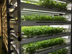 三菱化学、ベビーリーフの植物工場による生産・販売スタート。高栄養化・安定品質により機能性表示制度にも対応可能