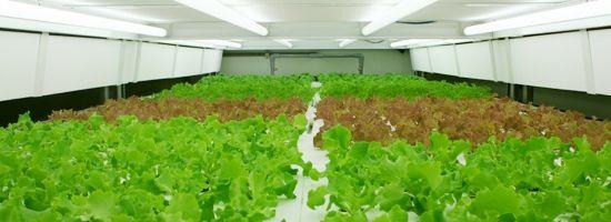 農業特区の養父市に人工光型植物工場を新たに建設(兵庫ナカバヤシ)