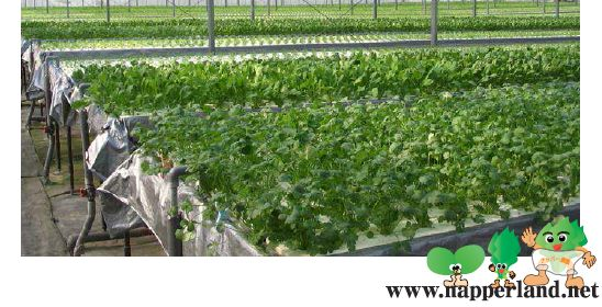 三菱樹脂、中国・無錫市に太陽光利用型植物工場の販売拠点を設立