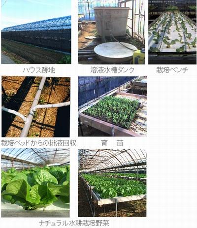 法律の改正や社会貢献事業の評価。水耕栽培を利用した障害者雇用の拡大が進む(有限会社新鮮組など)