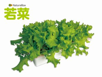 家庭向け水耕栽培キットをリニューアル、多様なニーズに応えるためコンパクトなシリーズを販売(深見製作所)