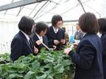 農業高校の温室ハウスにNECのデータ管理システム「農業ICTソリューション」を導入