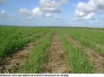 センターピボットやマイクロ灌漑システムなど、機械化灌漑システムの世界市場に関する報告