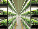 日清紡がイチゴ植物工場の増設へ 関東・東海エリア需要にも対応