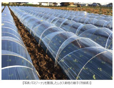 アキレス、強度・耐久性を高めた露地トンネル向け農ビ「ロジーナ」を販売開始